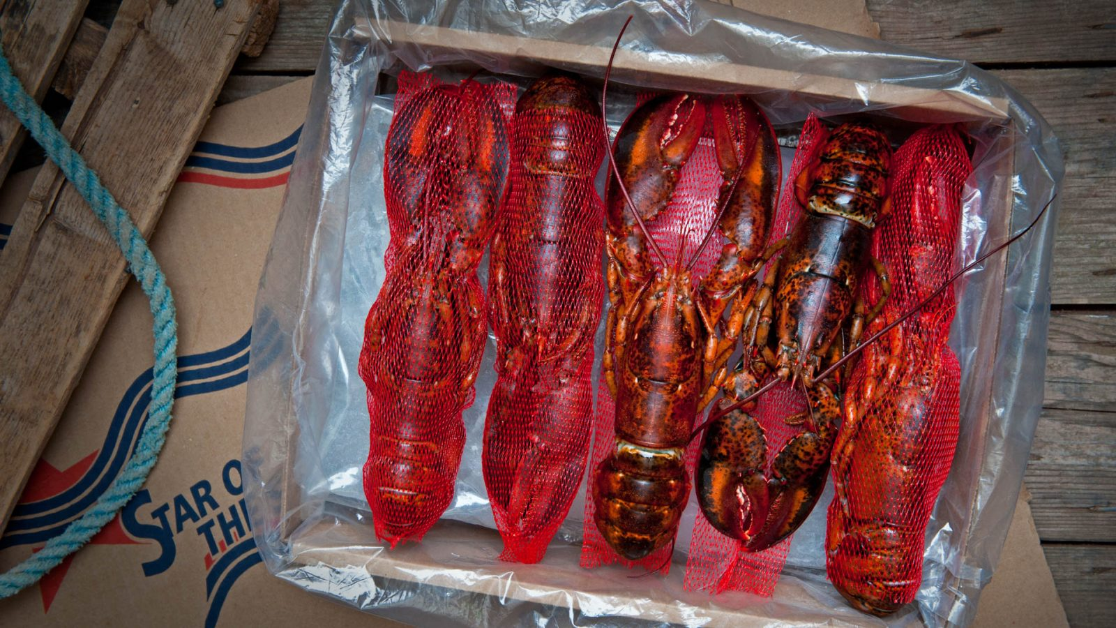 wholesale blanched PEI lobster